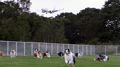 愛犬と車預けて旅へ 新千歳空港近くに新サービス駐車場