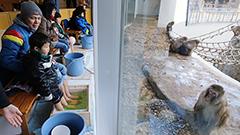 サル山眺め 足湯でポカポカ 円山動物園