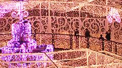 過去最多83万個の輝き ホワイトイルミネーション開幕 札幌