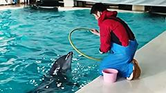 閉館中もイルカは訓練<おたる水族館楽しい仲間たち>16