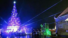 港で輝く巨大ツリー 函館でクリスマスファンタジー