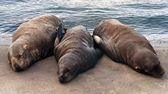 セイウチやトドに新しい命<おたる水族館楽しい仲間たち>20
