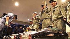 マグロにエビやヒラメ、青果も 中央卸売市場に響く初競りのかけ声 札幌